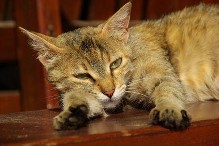 slink: cat 15