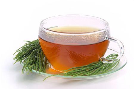 tea field horsetail 04 photo