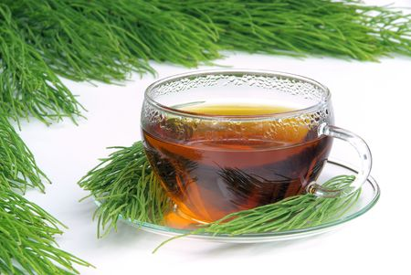 white tea: tea field horsetail 07