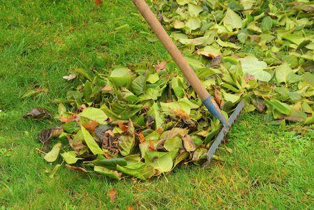 leaves rake 06 Stock Photo - 5974339