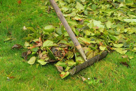 leaves rake Stock Photo - 6004532