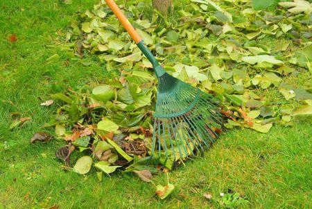 leaves rake Stock Photo - 6004531