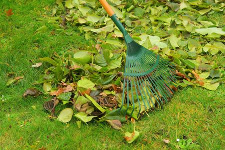 leaves rake 11 Stock Photo - 5974344