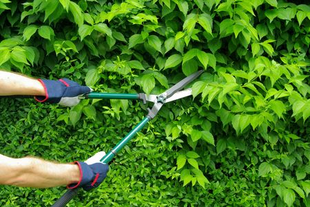 bush trimming: pruning