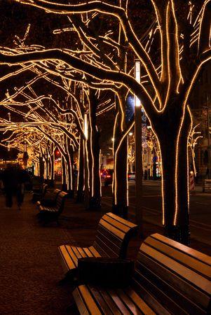linde: Berlin unter den Linden Trees Weihnachten 07