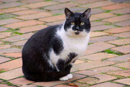 slink: cat 25 Stock Photo