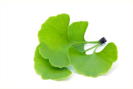 01: ginkgo leaf isolated 01