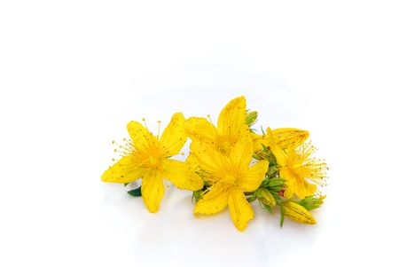 st: St Johns wort isolated 01