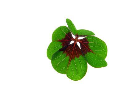 leafed: four leafed clover 18