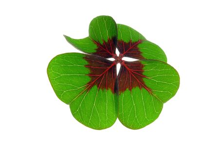 four leafed clover 20 Stock Photo - 6282905