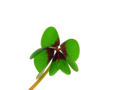 four leafed clover Stock Photo - 6741734