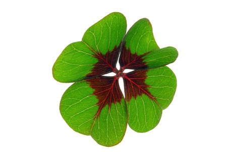 four leafed clover Stock Photo - 7991155
