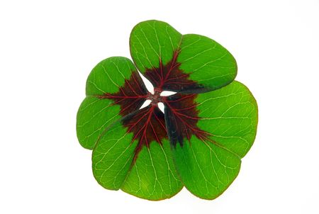 four leafed clover  Stock Photo - 7756110