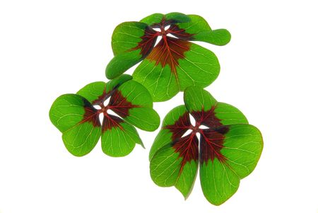 four leafed clover 27 Stock Photo - 6282840