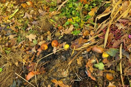 garden waste: compost pile Stock Photo