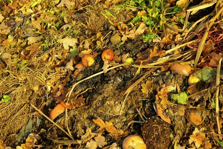 compost pile 13 photo