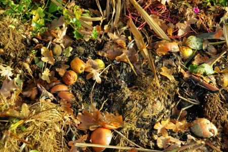 decompose: compost pile  Stock Photo