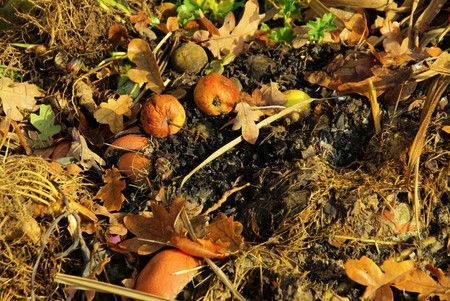 compost pile 15 photo