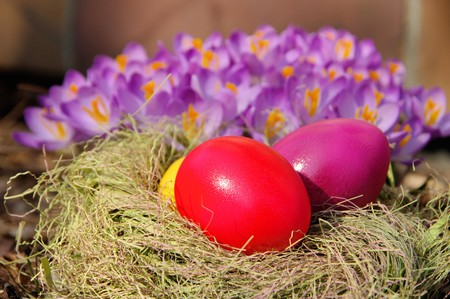 easter eggs and crocus 01 photo