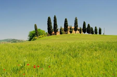 blume: Tuscany Stock Photo