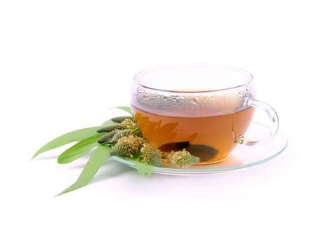 plantain: tea ribwort plantain 09