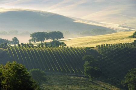 Tuscany hills Stock Photo - 7471538