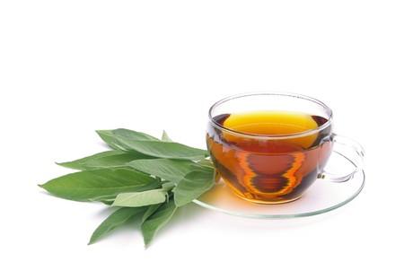 tea sage 10 Stock Photo - 7641863