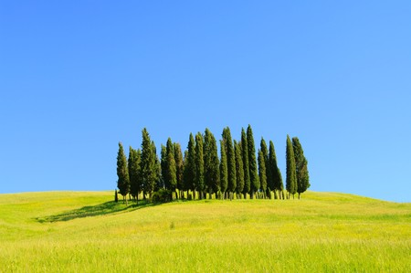 cypress: Tuscany forest