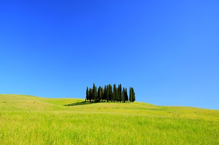 Tuscany forest  photo
