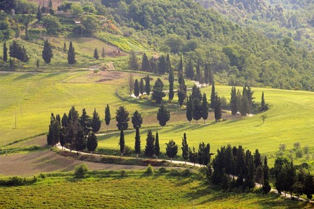 podere: cypress curve Stock Photo