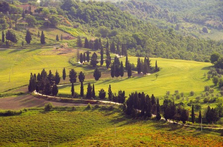 podere: cypress curve 32 Stock Photo