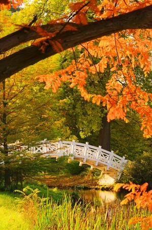 beech leaf: English Grounds of Woerlitz White Bridge 04