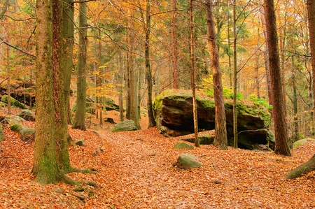sandstone rock in forest photo