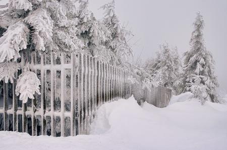 Erz: fence in winter 01