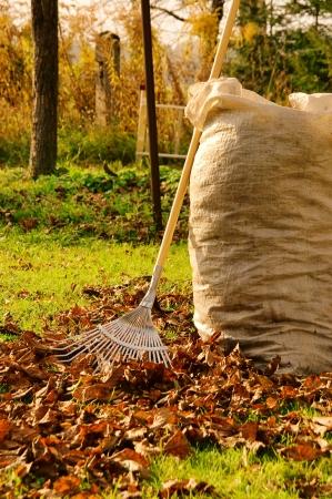 cleanup: leaves rake 12