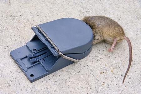 mousetrap 03 photo