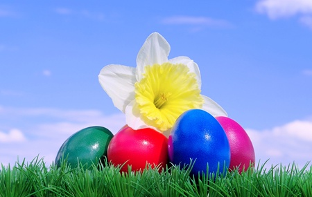 easter eggs on flower meadow and sky 08 photo