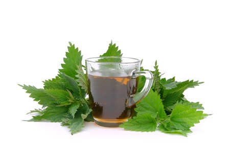 tea nettle 08 photo
