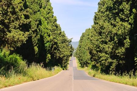 longest: cypress avenue longest from Italy