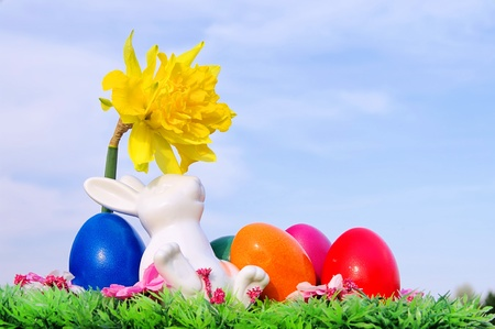 easter bunny on flower meadow  photo