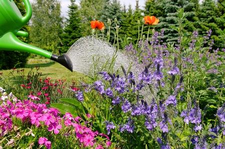 watering plant: flower watering