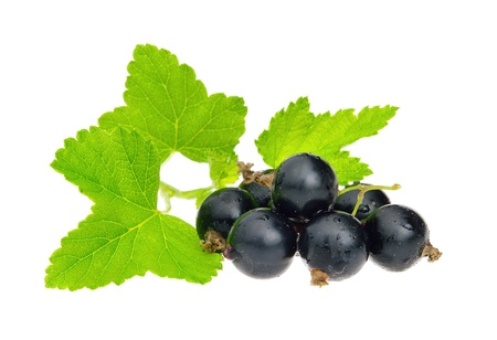 black currants: black currant isolated  Stock Photo