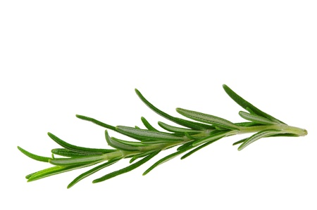 twig: Rosemary isolated  Stock Photo