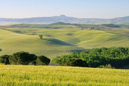 siena italy: Tuscany hills