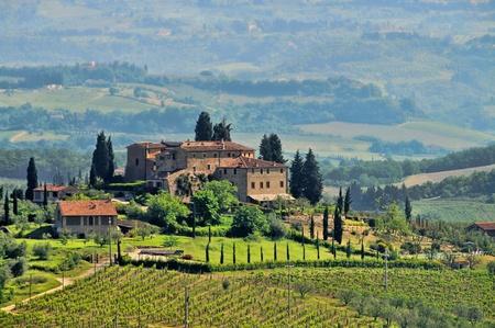 chianti: Tuscany vineyard
