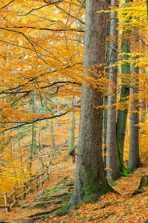 beech leaf: hiking trail  Stock Photo