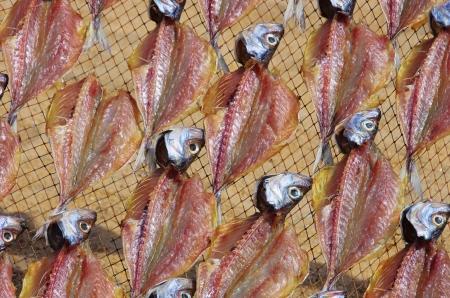 Stockfish photo