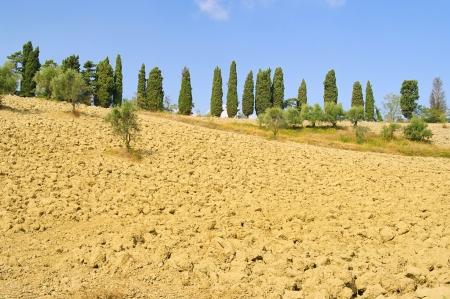 Tuscany field  photo