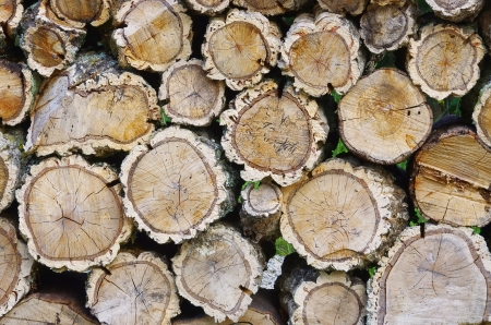 stack of wood from cork oak  Stock Photo - 15656154