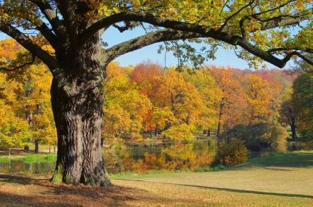 Oak tree in fall 02